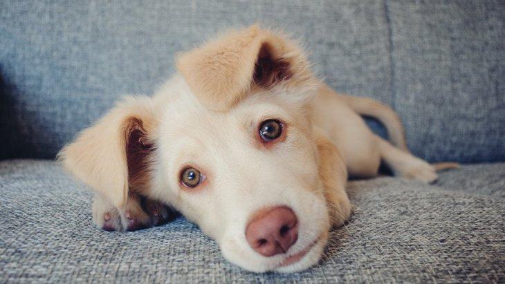 犬が『飼い主の顔の近くで寝る』心理5選!眠る位置によって気持ちが異なるって本当?
