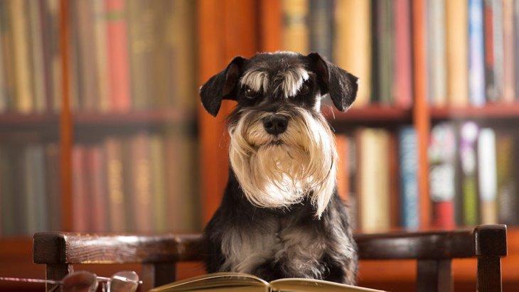 犬が長生きしなくなってしまう『絶対NG行為』3選