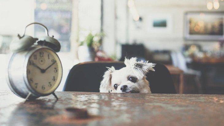 犬は飼い主の一日の行動を理解している?休日もわかってるの?