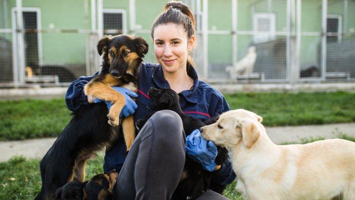 保護施設の犬は家庭犬よりもトレーニングへの反応が良い?【研究結果】