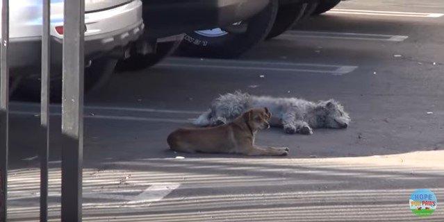落ち着いた子と臆病な子。寄り添って路上で生きてきた小型犬コンビを保護