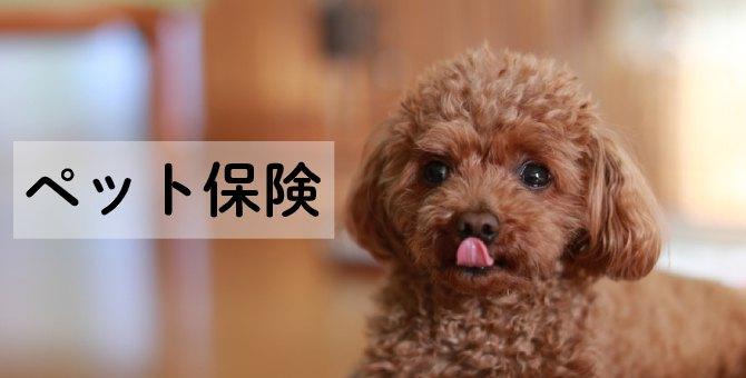【締切間近】ペット保険ご成約で豪華ダブルプレゼント!