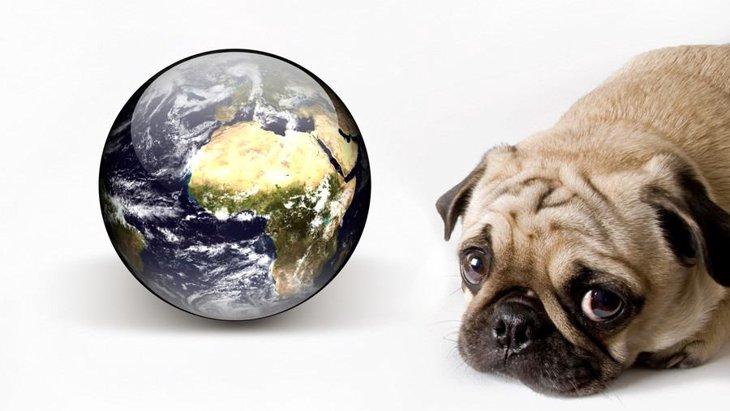 知っておきたい!地球温暖化がペットに及ぼす影響とは?