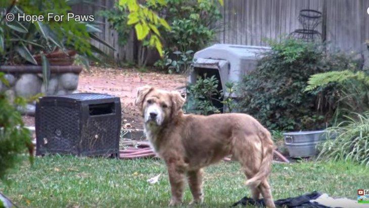 空き家に住み着いた3匹の犬。臆病者の1匹だけ取り残されて…