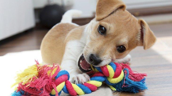 犬に与えてはいけないおもちゃの特徴5つ