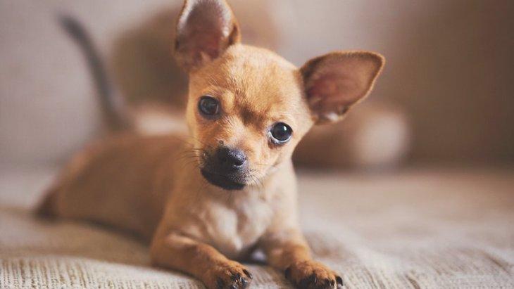 犬に『大声を出すしつけ』はしないほうがいい?