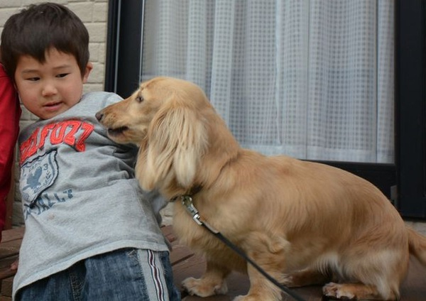犬が唸る本当の理由とそのケース