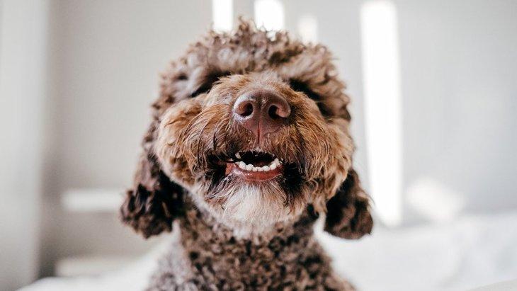 イライラ…犬が嫉妬しているときの仕草や行動6つ