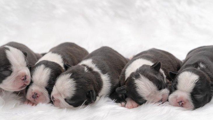 犬のお産はどういうもの?準備や出産の兆候と流れ、産後のケアについて
