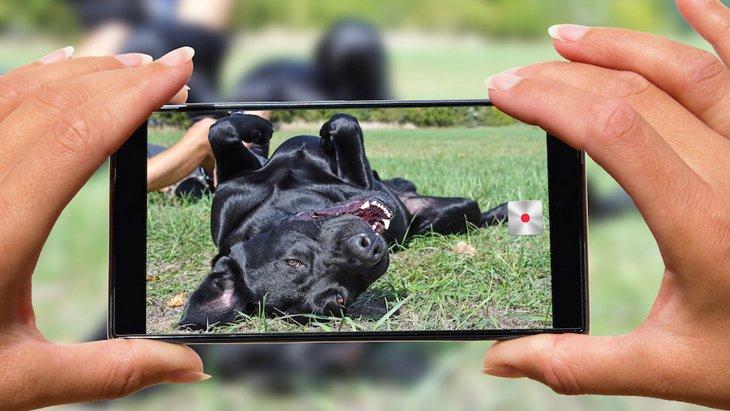『ドッグピープルの真実』愛犬家へのアンケート調査の結果は笑撃的?