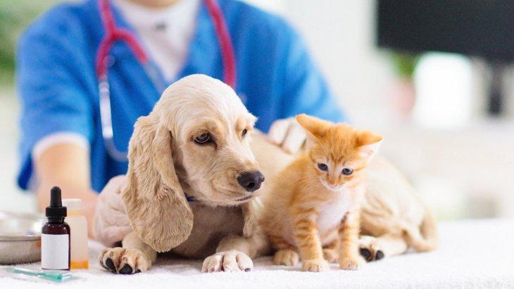 犬に血液型ってあるの?判定方法から徹底解説!