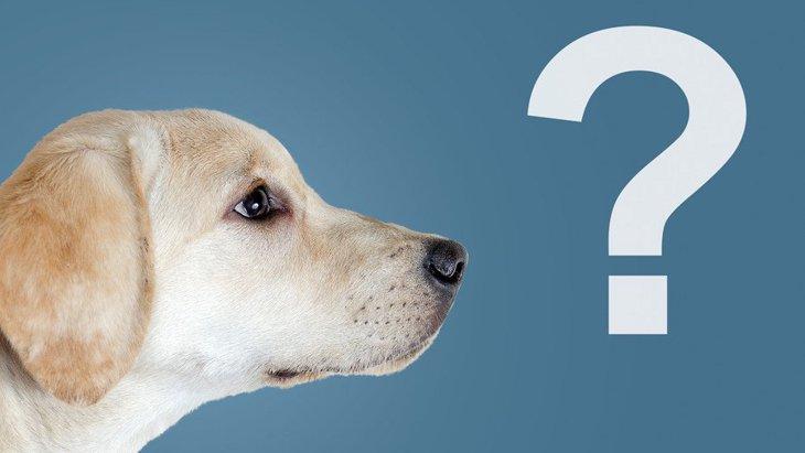 犬は『曜日』を理解しているの?