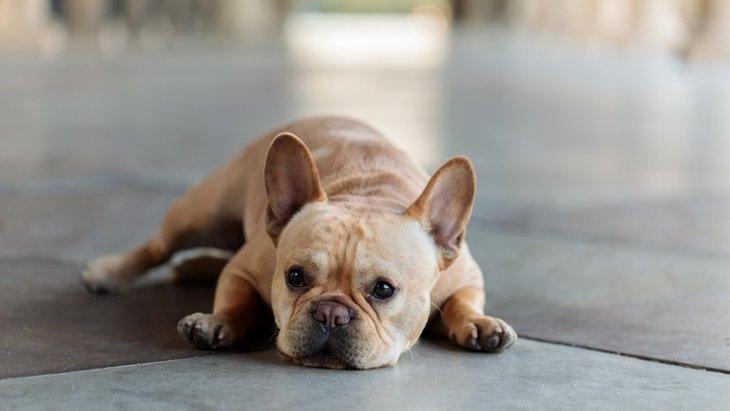 犬が物や壁にぶつかる時に考えられる原因3つ