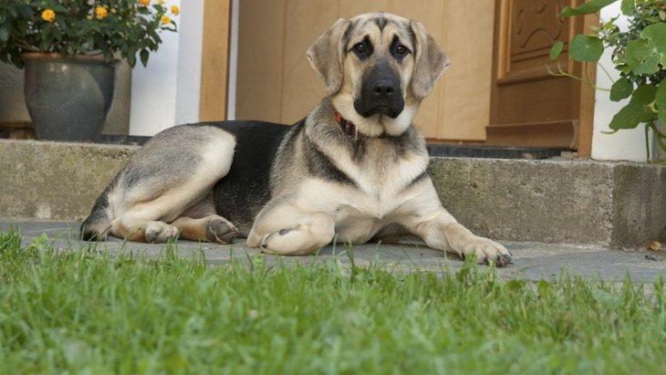 犬が飼い主以外に懐いてくれない3つの理由と対処法