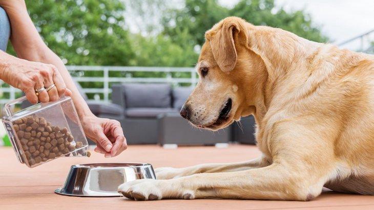 犬が見せる『食べすぎサイン』4選!ご飯を与えすぎると起こる悪影響とは?