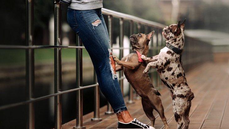 犬が飼い主の足に体をぶつけてくる心理3選