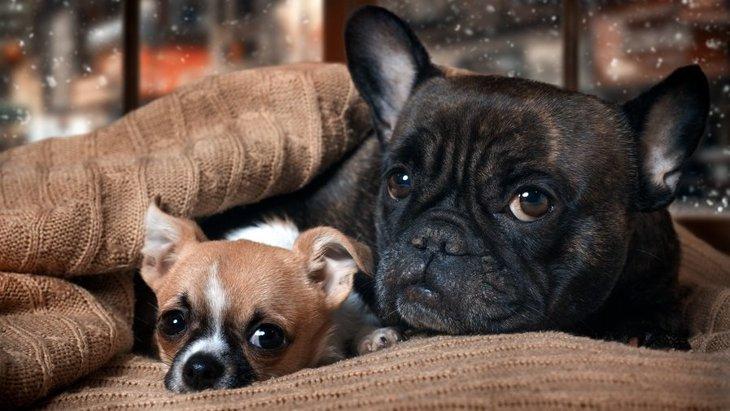 犬にも『湯たんぽ』は効果アリ?効果的な使い方からNG行為まで解説