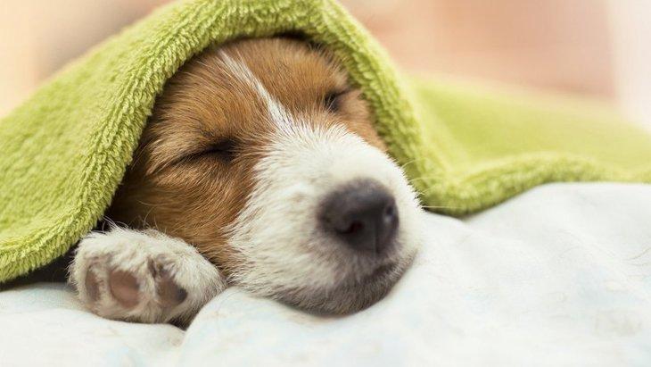 犬が『夜泣き』をする心理3つ