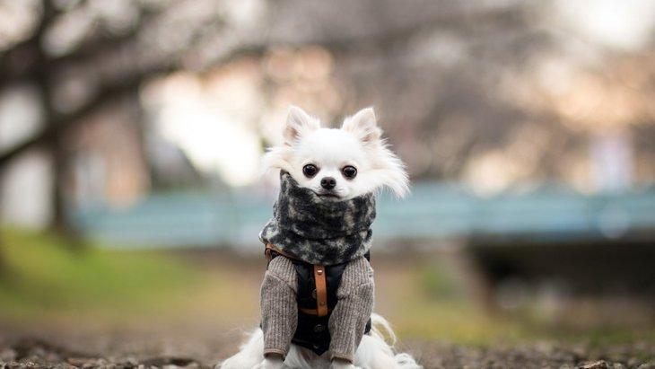 犬が見せる『寒いサイン』5つ