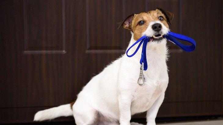 犬がソワソワしがちなシチェーション5つ