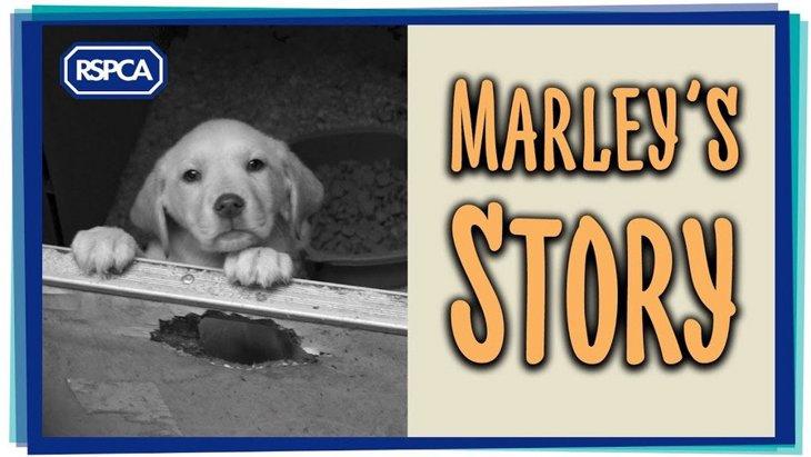 違法な子犬工場の摘発で出会った子犬と警官。強いきずなが生まれました