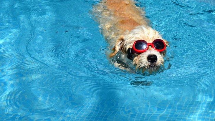 犬が海や川で溺れてしまった時の応急処置の方法