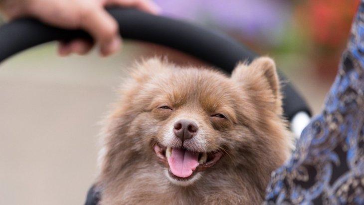 がんになりやすい犬には特徴がある?三つの共通点や見直すべき習慣とは