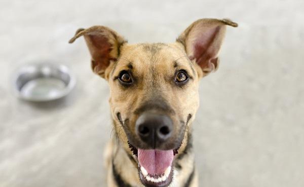 犬の好物について ワンコにご褒美をあげよう!