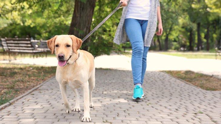 犬の飼い主は毎日のお散歩で合計どのくらい歩いてるの?実は年間730キロメートルも歩いてた!?