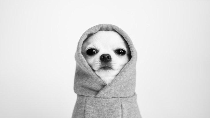犬との信頼関係が崩れたらどうすればいい?
