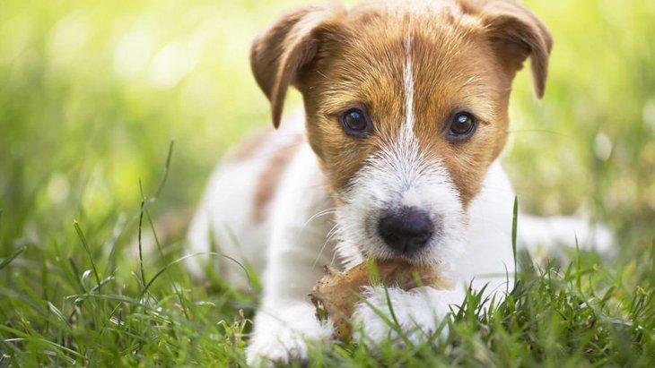 犬に絶対してはいけない「おやつの与え方」4選
