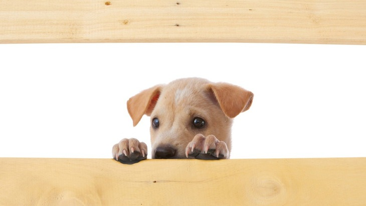 犬にも恐怖症がある!主な症状と原因、克服する方法まで