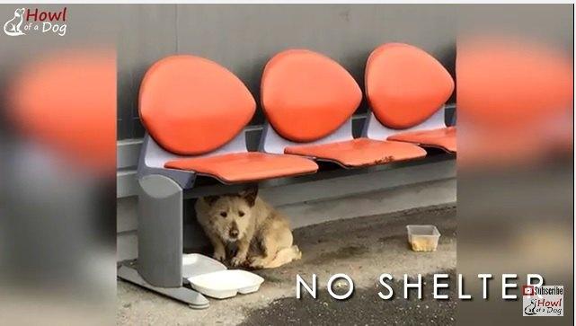 『ホームレス犬』の現実…彼らは助けの手を待ち続けている