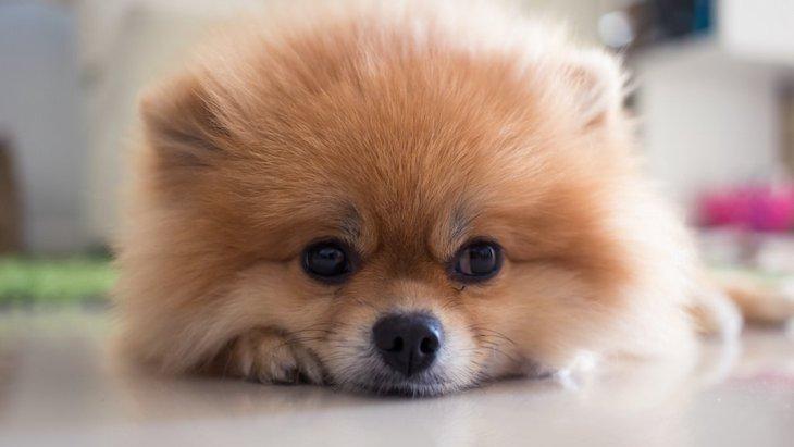 犬が不機嫌になる飼い主の行動3選!あまり無理やりすぎると、ストレスに繋がるかも…?