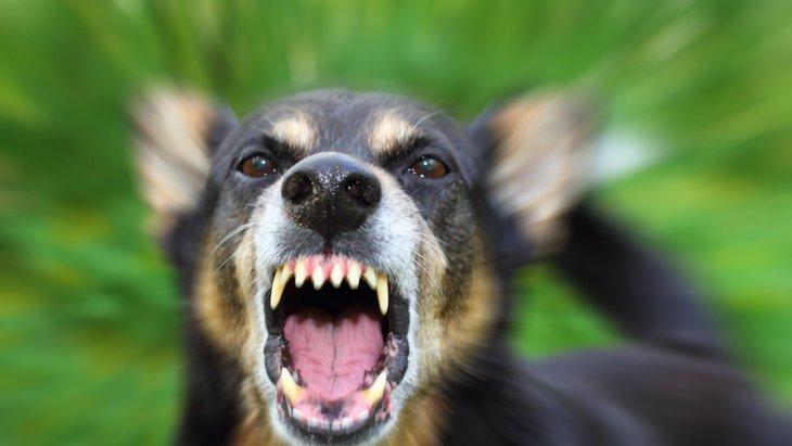 犬が人間の子どもに吠える3つの原因と対策