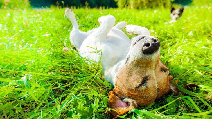 知っておこう!犬が葉や枝を食べる行為についての危険性