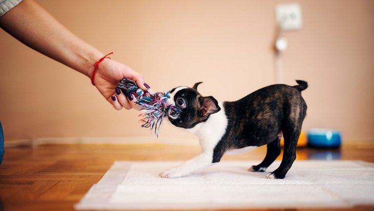 子犬との正しい遊び方3つ