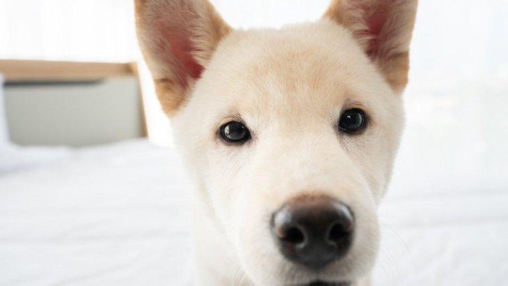 犬が『信用していない人』にする行動4選