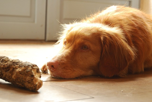 犬の重大な病気の兆候は「鼻水・鼻血・咳」に隠れている!
