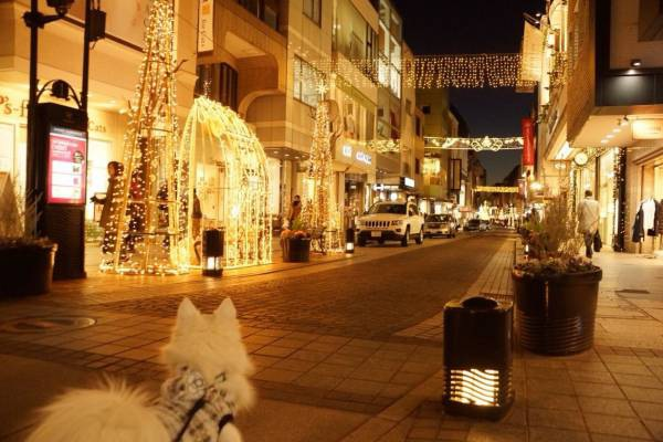 横浜の愛犬と過ごせるカフェ「パンケーキリストランテ」と元町イルミネーション