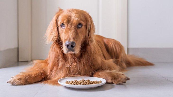 成犬に子犬用のドッグフードを与えちゃダメ?