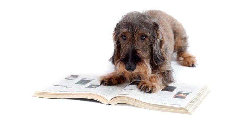 犬が出てくる絵本6選