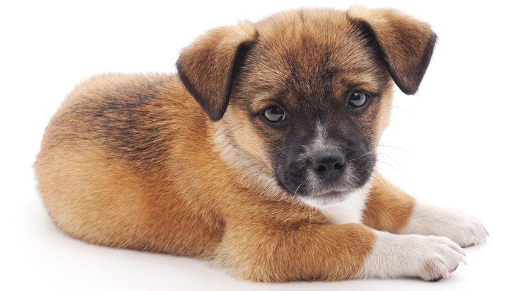 初めて犬を飼うことを検討している方へ《犬を飼う前に考えておきたいこと》