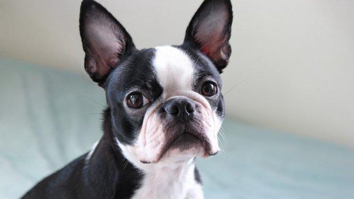 『犬の目を見つめてはいけない』と言われている4つの理由