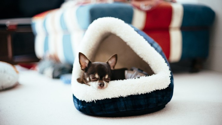 犬にとっての『寝心地の良いベッド』とは?5つの特徴と快適な環境を作るコツ