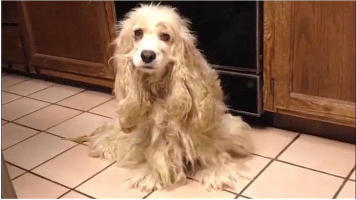 オスメスの判断すらつかない状態…砂漠に遺棄された繁殖犬