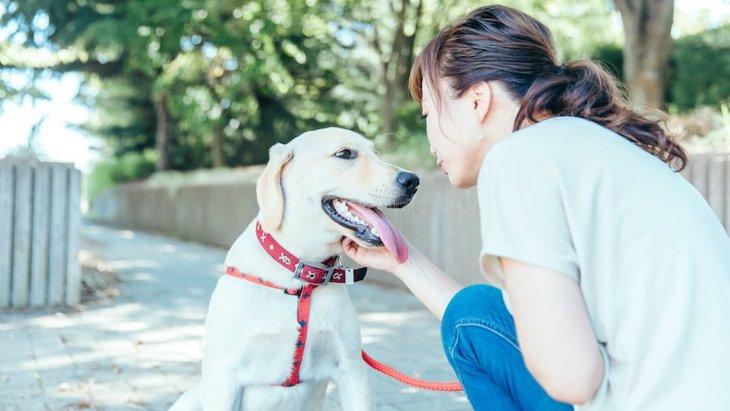 SNSのスター犬バニーが学んだ「会話の方法」
