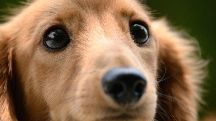 犬を不幸にする4つの考え