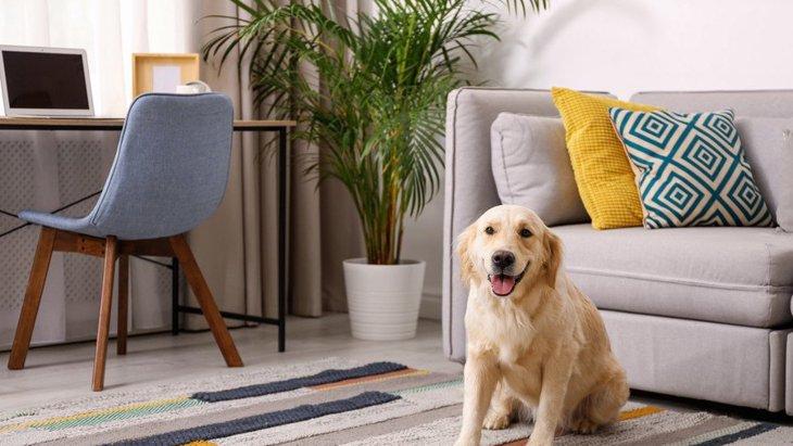 室内で犬を飼う時のNG行為4つ