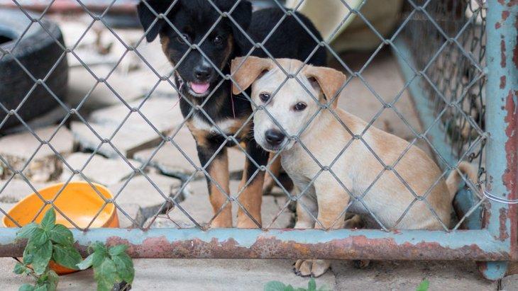 子犬工場で生まれた犬の性質に関するリサーチ結果